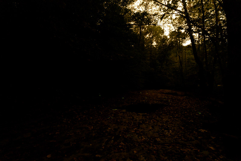 I took these photos as a guest of a Bernheim Forest Night Naturalist