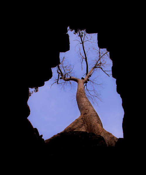 Fig tree seen through a roof opening at Preah Khan temple, Angkor.