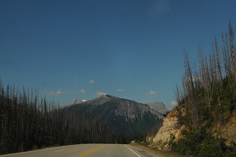 Storm Mountain is flanked by the burnt out forests of Kootenay National Park.
