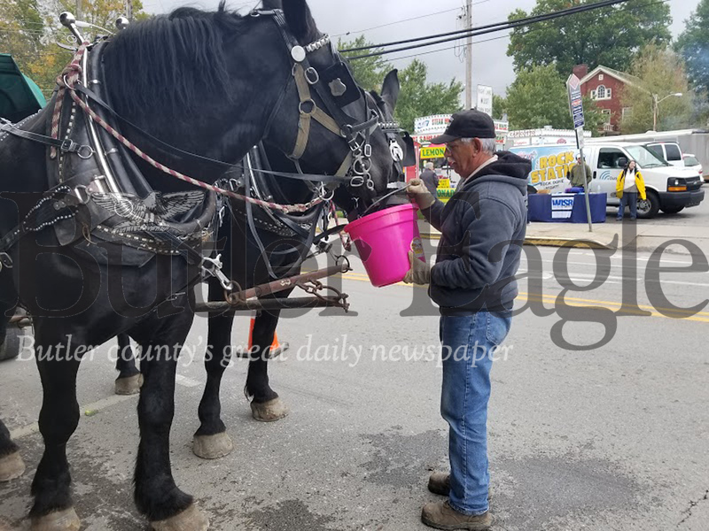 Dean Bostwick of the Magic Horses Equine Services gives the horses a rest and a drink on Saturday before they depart for more carriage rides around Zelienople at the fall festival.