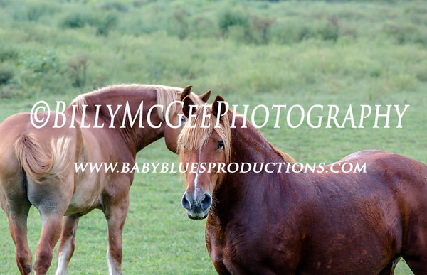 Horses and Fields - 08 Sep 2012