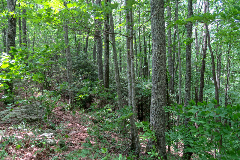 Green Mountain Trail -- 3,960'