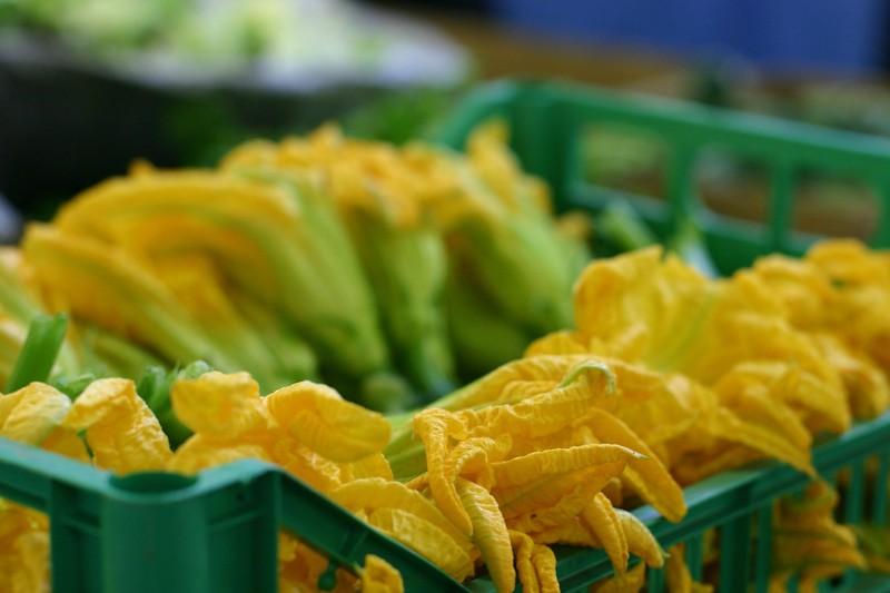 zucchini-flowers-nhr_2088035670_o.jpg