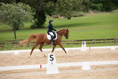 Horse 379