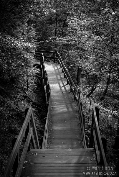 Scenic Walkway. Photography by Wayne Heim