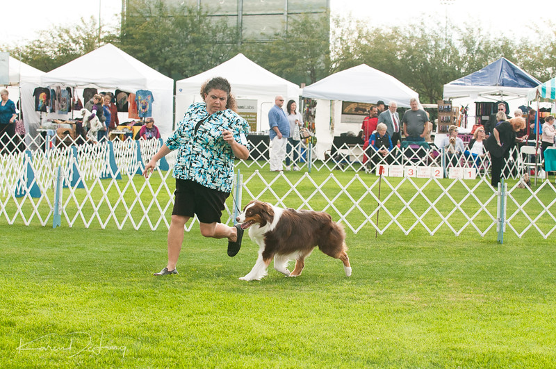 20170114_Kachina Kennel Club_Aussies-48.jpg