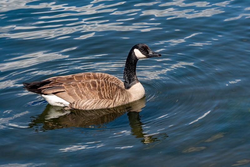 Lake_Murray20202003081135-7.jpg