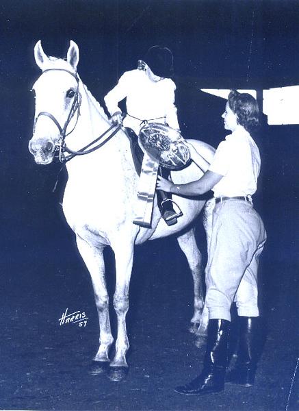 Horse Charlotte.JPG