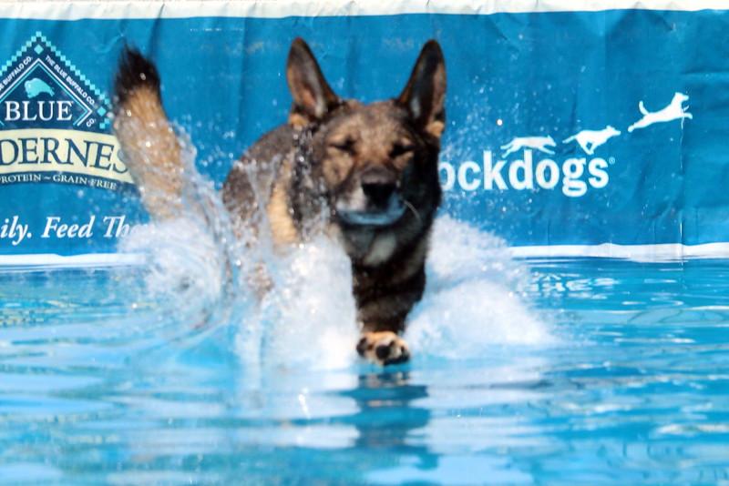 2015.8.6 Winnebago County Fair Dock Dogs (15).JPG