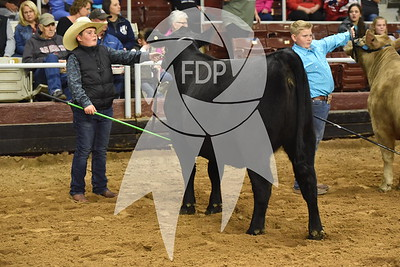 Showmanship Ring Shots