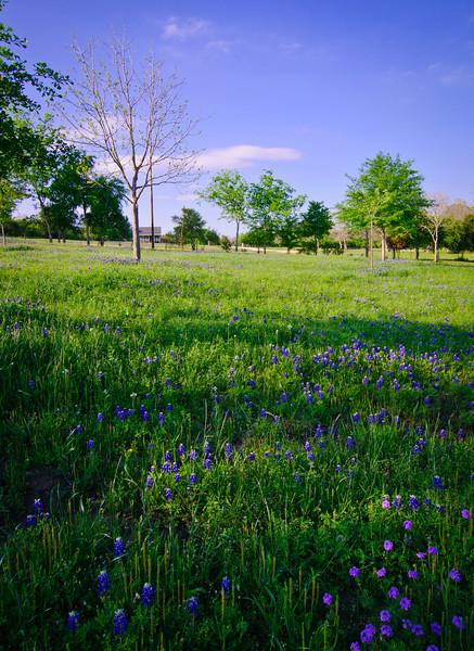 Blue Bonnett Lane at Chappell Hill-7664.jpg