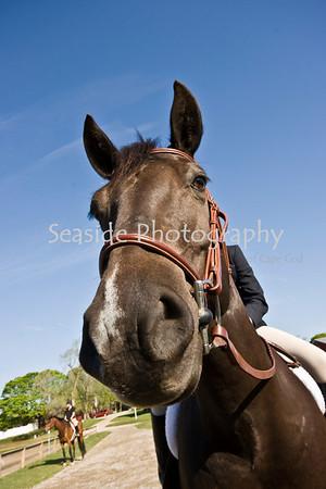 Horseshows 2008