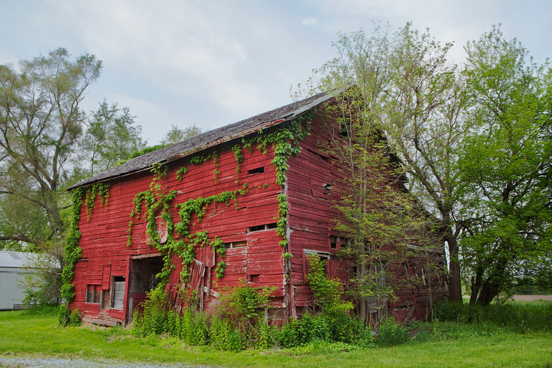 Red barn with Ivy, near Kankakee, Illinois
