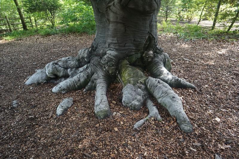 Reeves-Reed Arboretum 38.jpg
