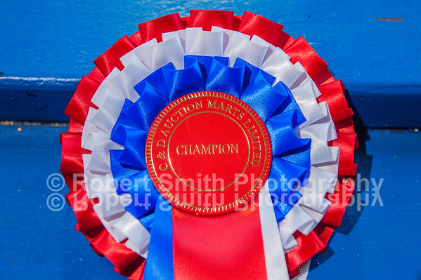 Longtown Suckler Calves prize show and sale - October 3rd 2015