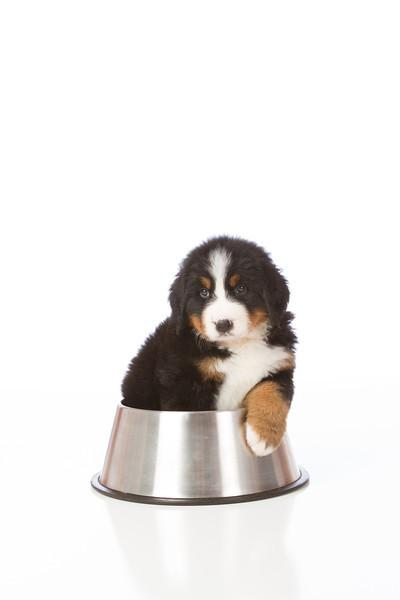2013-Pearson Pups-Jun02-0343.jpg