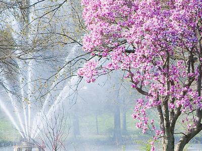 Forest Park April 3 2010