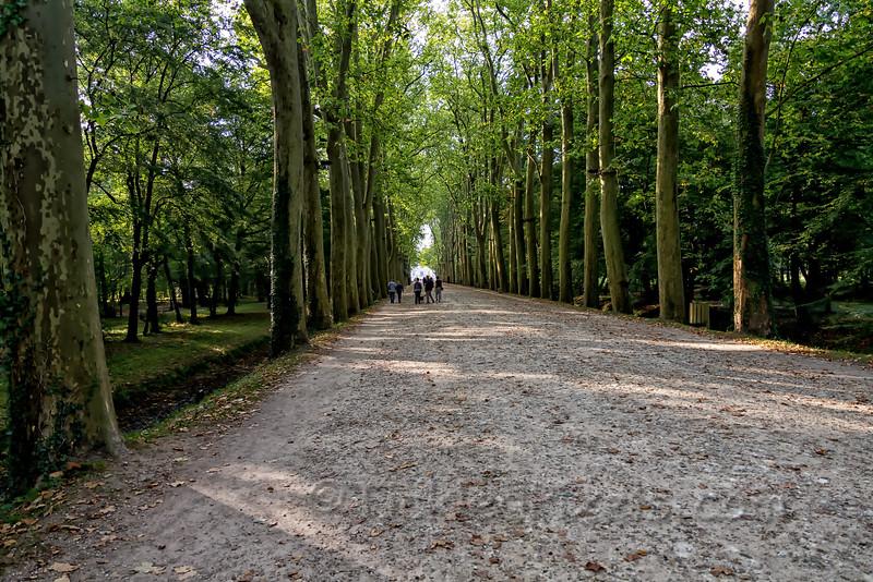 Tree-Lined Entrance to Château de Chenonceau