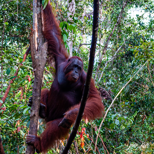 2012.10.07_Borneo_DSC_6859-Edit-Juno Kim.jpg