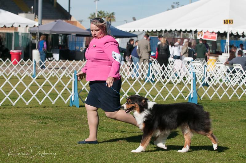 20170205_Australian Shepherds_Lost Dutchman Kennel Club-47.jpg