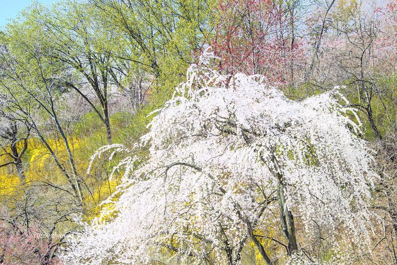 Branch Brrok Park Spring