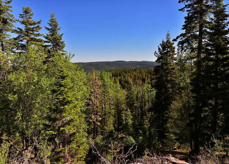 NEA_2252-7x5-Lincoln Nat Forest.jpg