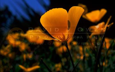 Texas - Flowers