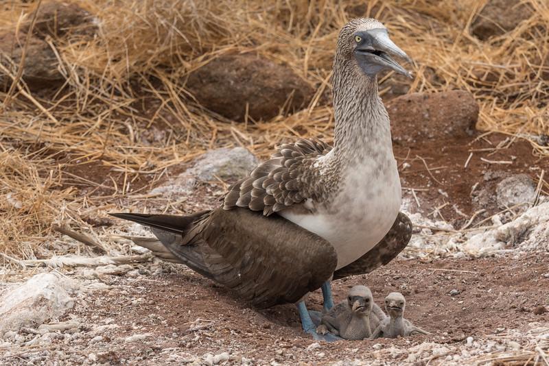 Galapagos-Best-033.jpg