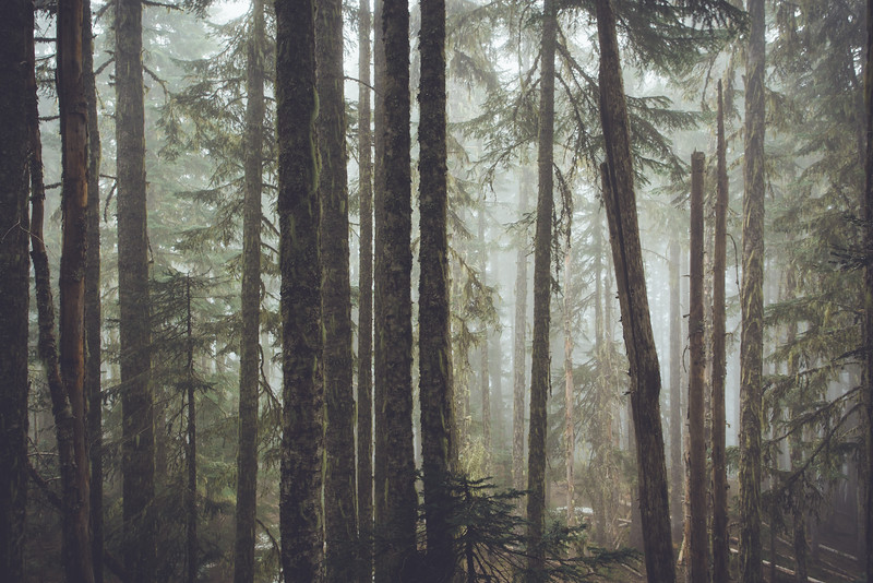 Elk Mountain Mist