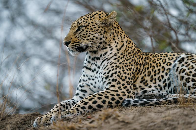 LeopardHills-20180929-0261.jpg
