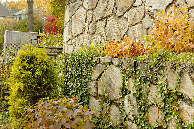 Wall Garden.jpg