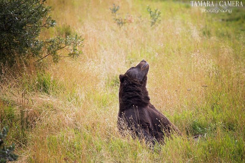 Bear2-6-2.jpg