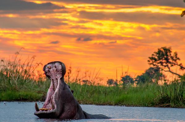 africa overland camping safari