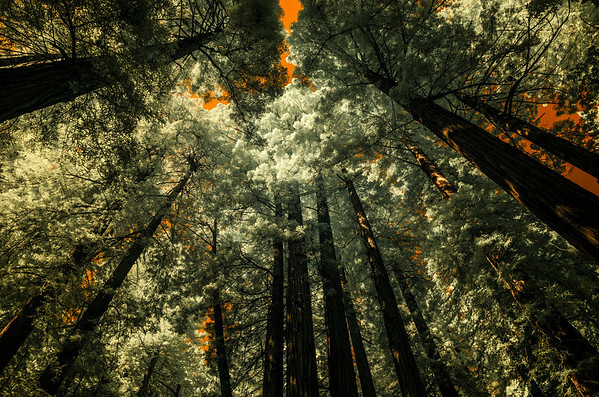 Muir Woods Revisited (again) - March 2013