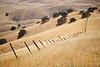 Fence Line - Pacheco Pass - Hollister, California, USA