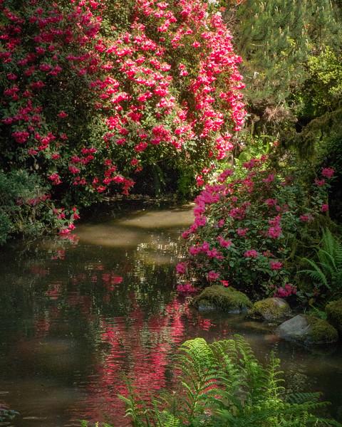 Kubota Garden Reflections