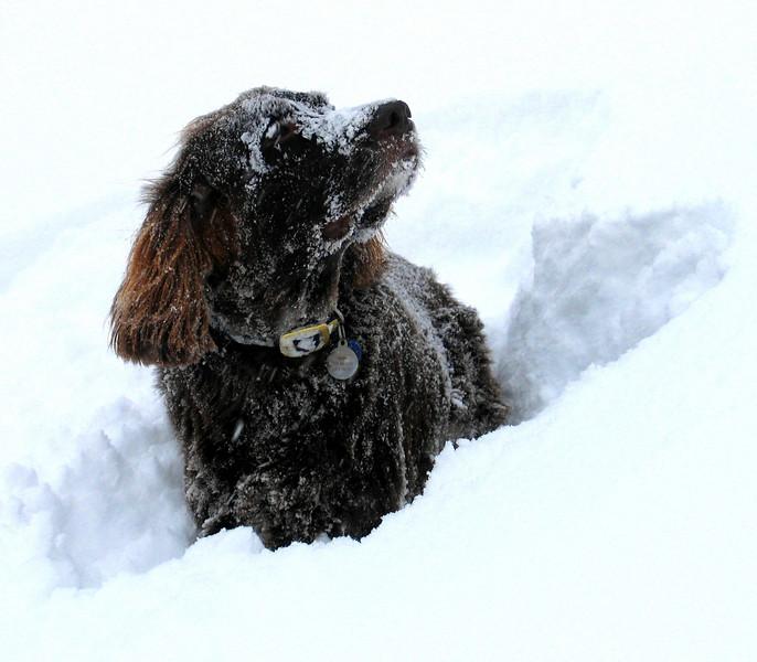 Vin in Snow in Brezovica.jpg
