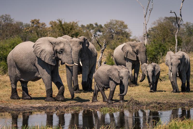 Botswana_June_2017 (3248 of 6179).jpg