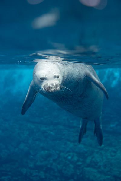 monk seals-13.jpg