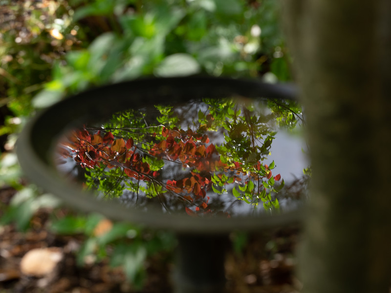 Garden_apr20-4200172.jpg