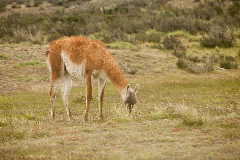patagonia-1166.jpg