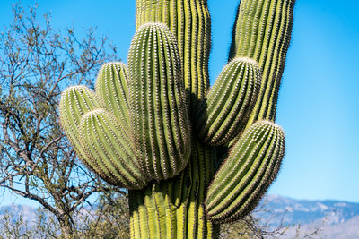 Saguaro National Park 2020