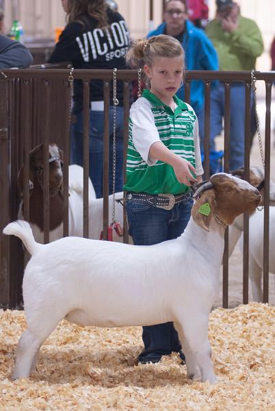 kay_county_showdown_goats_20191207-119.jpg