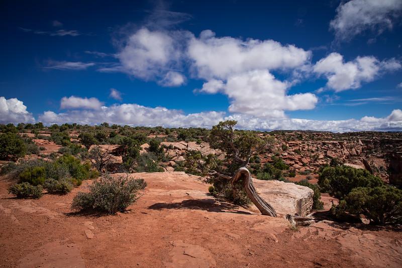 Canyonlands-16.jpg