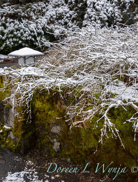 Acer entrance to office in snow_4082.jpg
