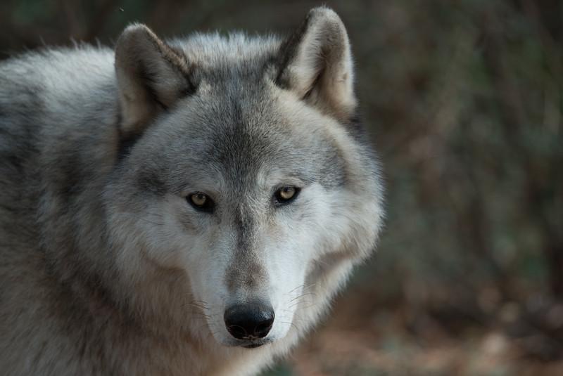 Seacrest Wolves_-70.jpg