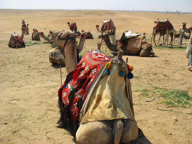 Egypt-76.jpg