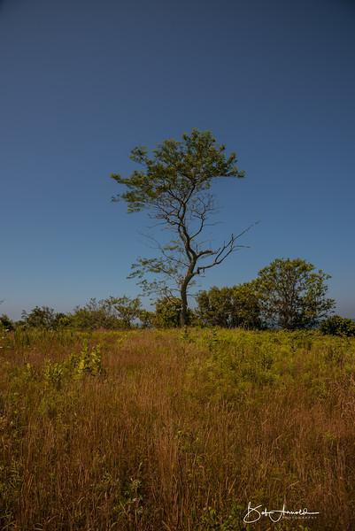 Block Island-45.jpg