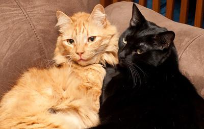 Tara & Simba 1/14/2011