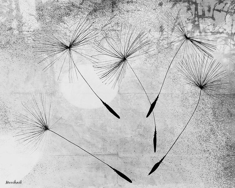 blowinginthwwind.jpg